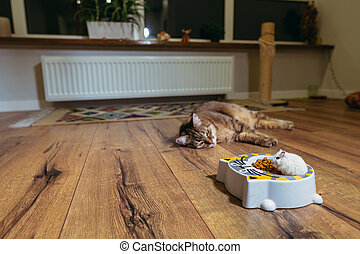 Cat food. The cat looks at the plate with cat food into which the hamster climbed.