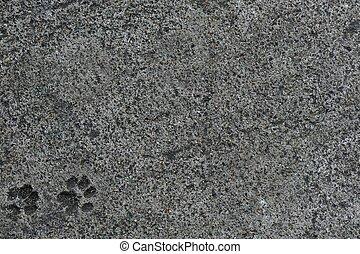 cat foot print on concrete floor - abstact of cat foot print...