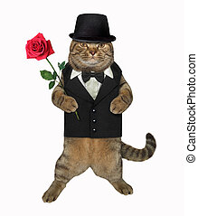 Cat gentleman with a red rose 2