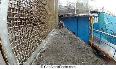 Cat goes along the iron lattice