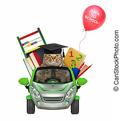 Cat goes to school by car 2