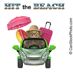Cat going to the seaside 2