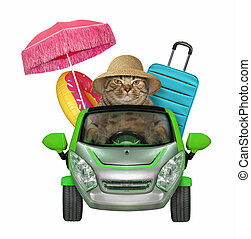 Cat going to the seaside