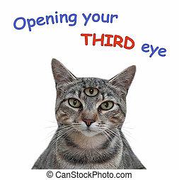 Cat gray has three eyes 2