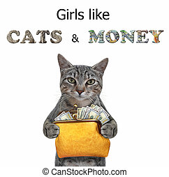 Cat gray holds wallet with dollars 3