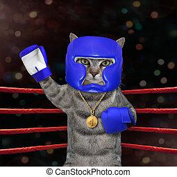Cat gray in blue boxing uniform 3