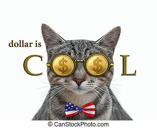 Cat gray in cool dollar glasses 3