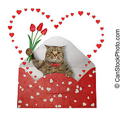 Cat gray in holiday envelope 2