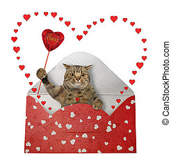 Cat gray in holiday envelope 3