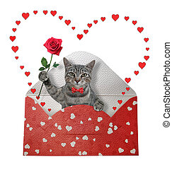 Cat gray in holiday envelope