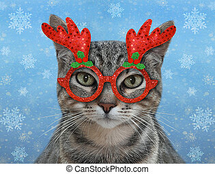 Cat gray in holiday glasses
