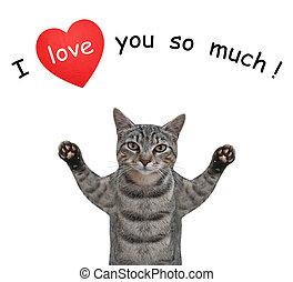 Cat gray in love