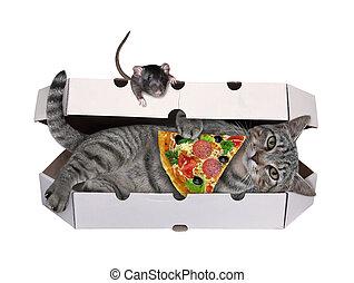 Cat gray in pizza box