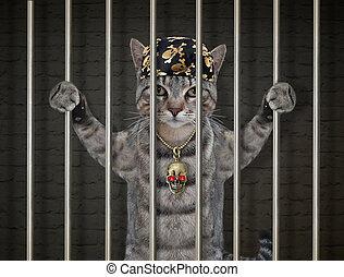 Cat gray in prison 2