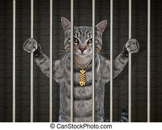 Cat gray in prison