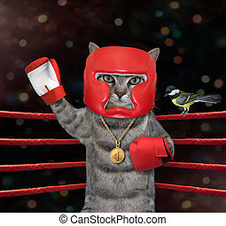 Cat gray in red boxing uniform 3