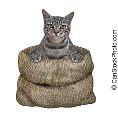 Cat gray in sack
