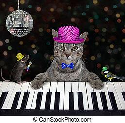 Cat gray plays piano in nightclub 2