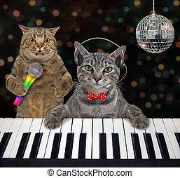 Cat gray plays piano in nightclub 3