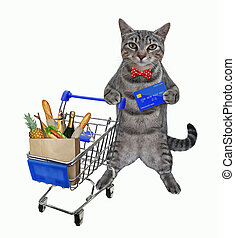 Cat gray with credit cart pushes trolley