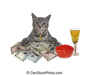 Cat gray with dollars and caviar