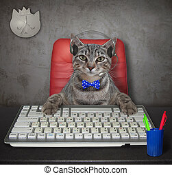 Cat gray works in office 2