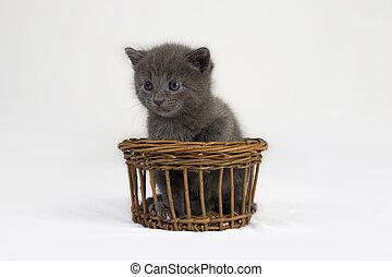 Cat - Grey Kitten in Basket