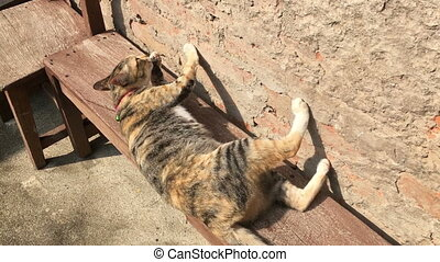 Cat grooming itself on wooden bench