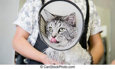 cat haircut in the salon