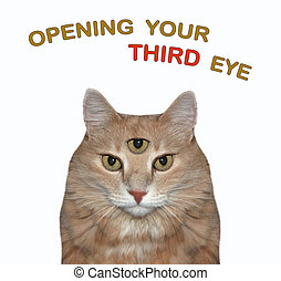 Cat has three eyes 2