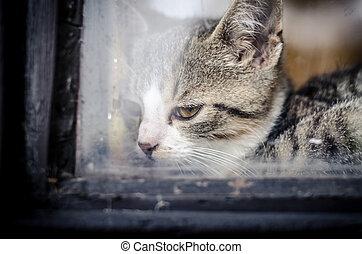 cat head behind window