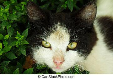 Cat head in green grass close up