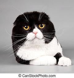 Cat head on grey background