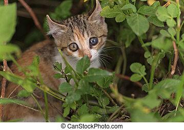 cat hide in the grass