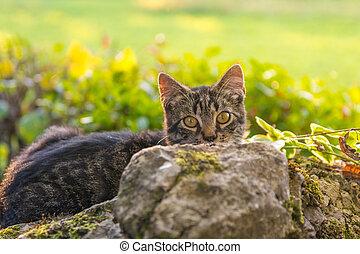 Cat hiding behind a rock.