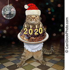 Cat holds 2020 Christmas cake 2