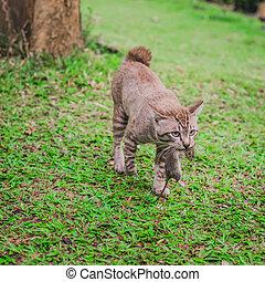 Cat hunt rat