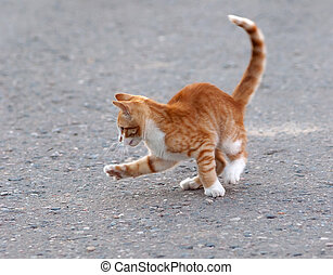 Cat hunting for mosquito