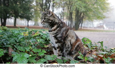 cat hunting in city park - City cat in park in Frankfurt,...