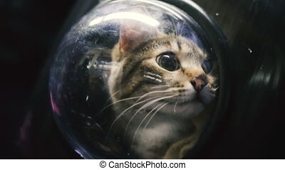 Cat in a backpack with a porthole