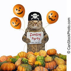 Cat in a bandana near pumpkins 2