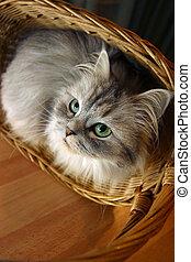 Cat in a basket - 1