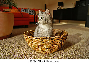 Cat in a basket