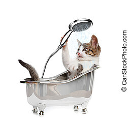 Cat in a bathtube with the shower on white background