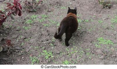 Cat in a Green Park - Black cat walks in the green city...