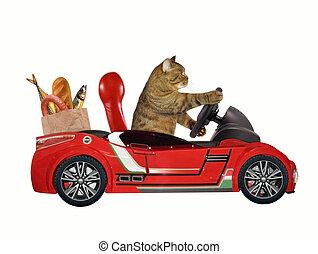 Cat in a red car 1
