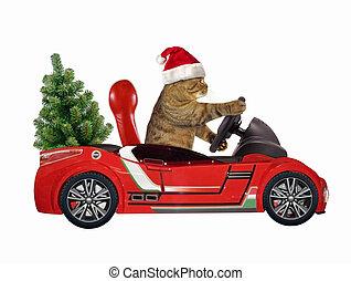 Cat in a red car 2