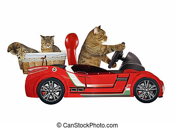 Cat in a red car 3