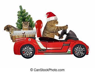 Cat in a red car 4