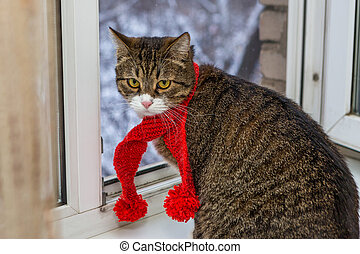 Cat in a red scarf sits on the windowsill